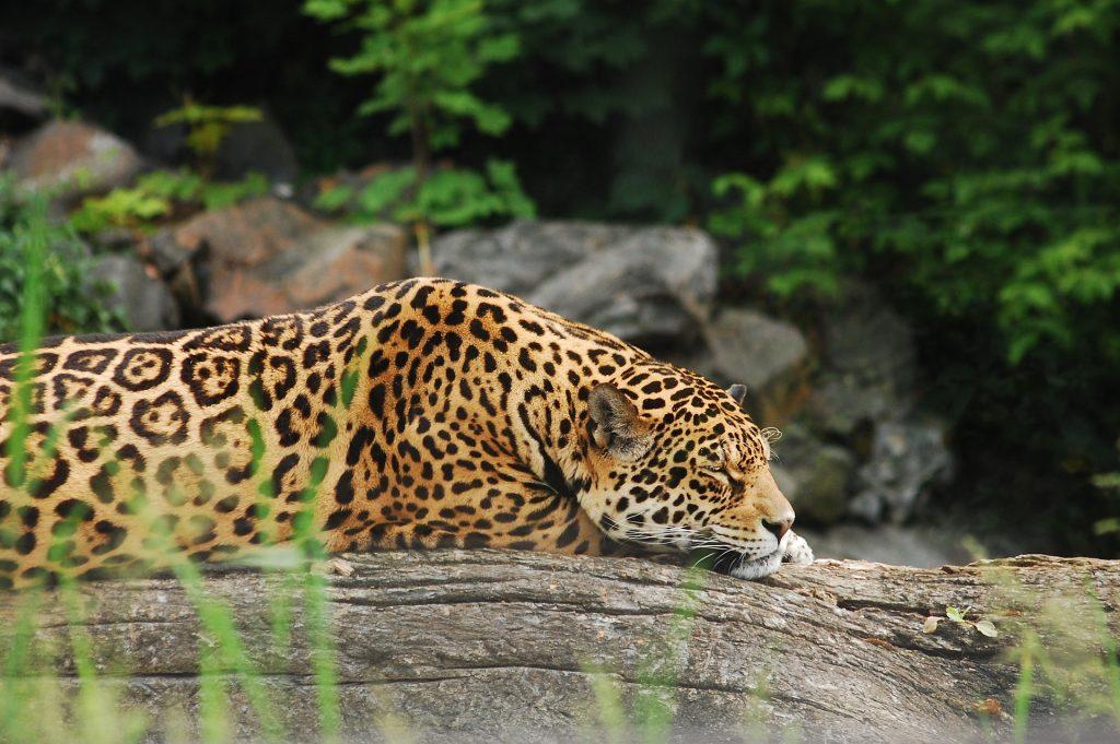 Ein Ausflug in den Zoo auf blog-baron.de
