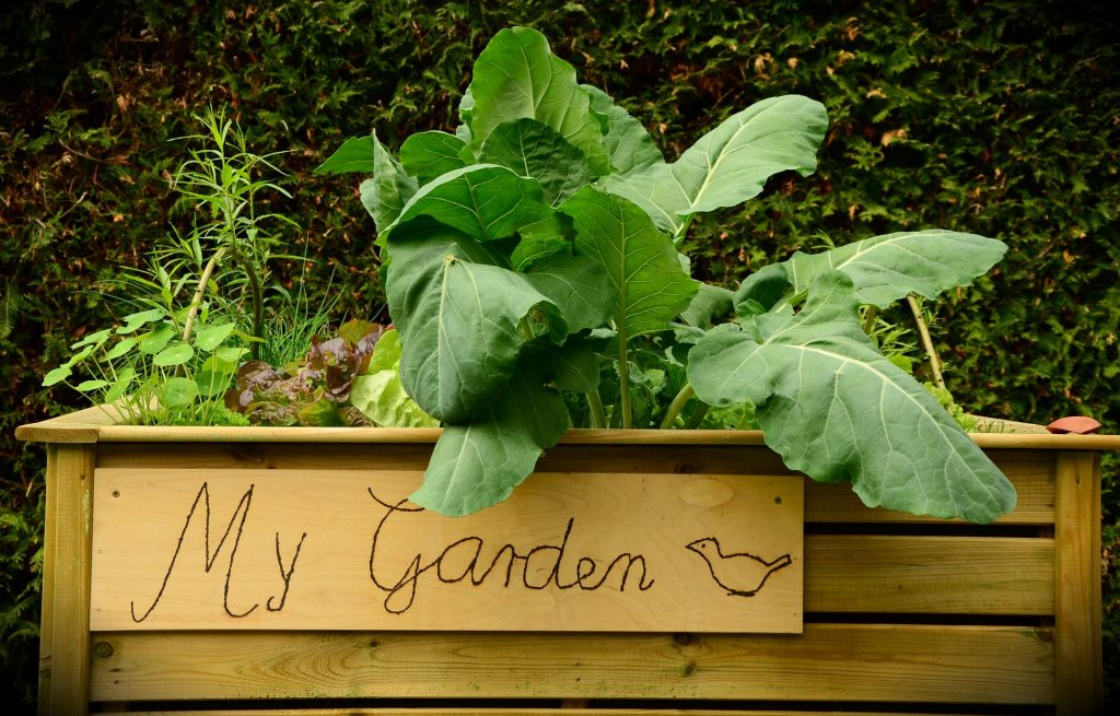 Gemüseanbau am Balkon auf blog-baron.de